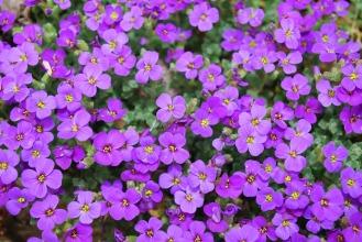 flower-321304_1920