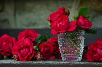 roses-821705_1920